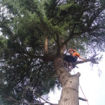Jamie Removing The Small Branches