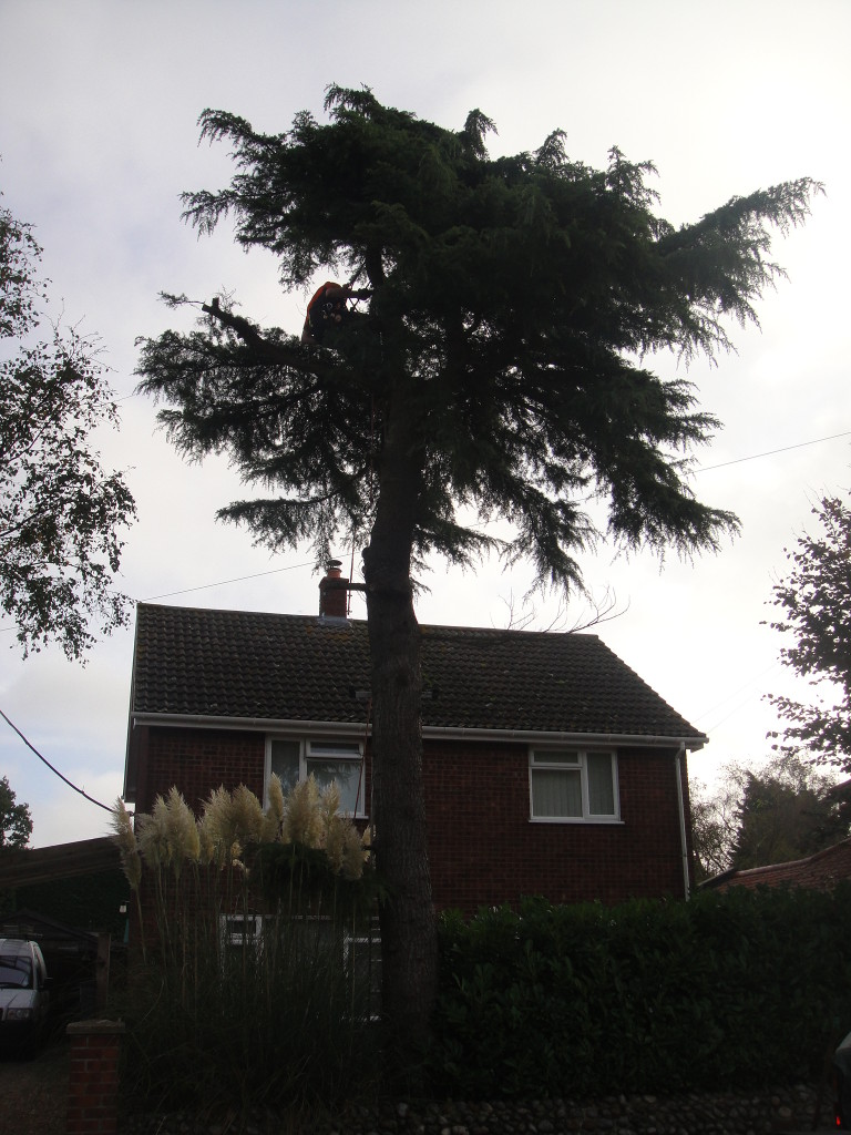 Jamie Starting Work On The Large Fir