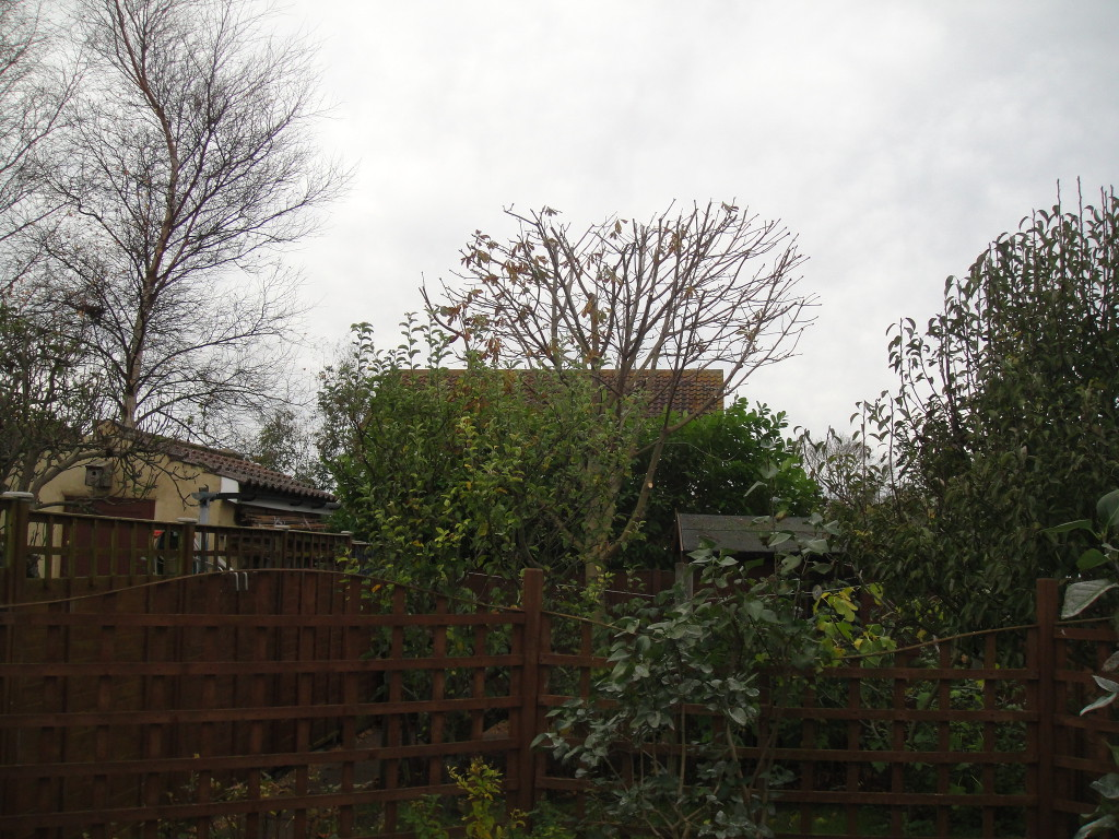 4.AFTER - Horse Chestnut With Height Reduced & Crown Lifted - Nov '14