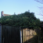 BEFORE - Garage & Shed Roofs Weighed Down By 15 Years Worth Of Ivy Growth - Jan '15
