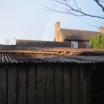 Clean Garage & Shed Roofs...All Ivy Removed
