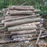 A few logs ready to saw into burner sized pieces.