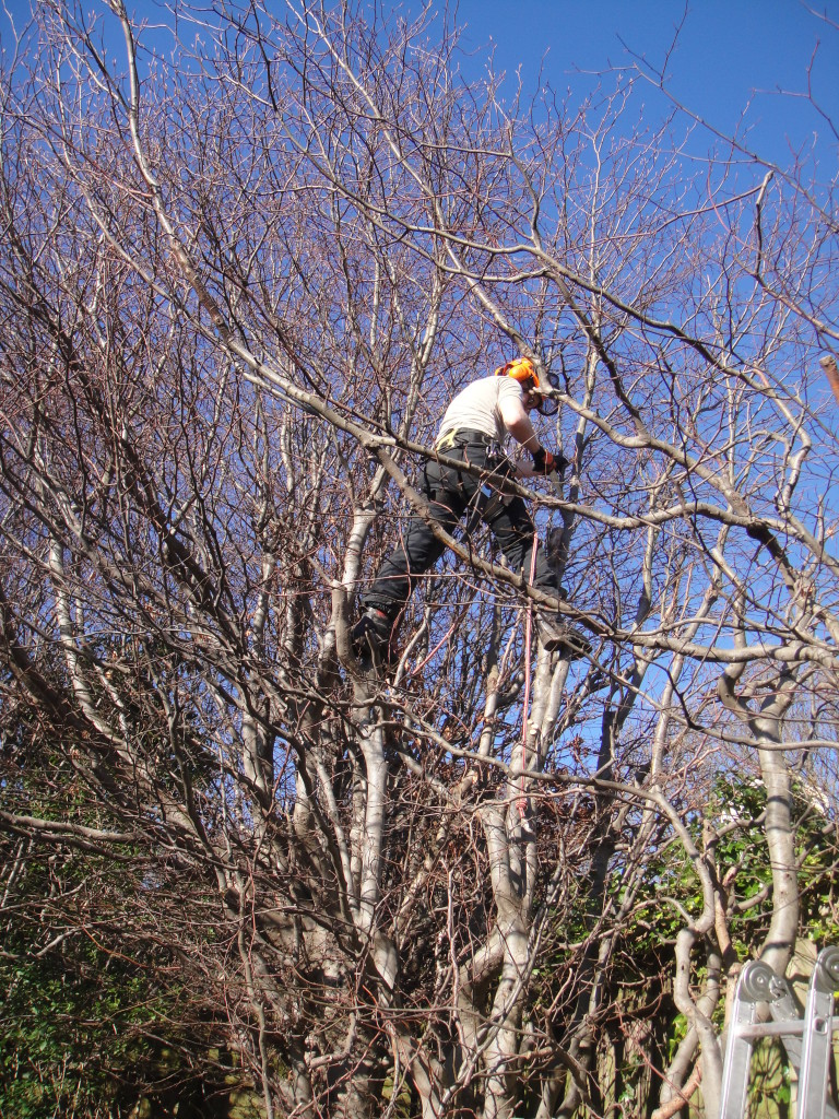 Jamie topping medium Beech Tree