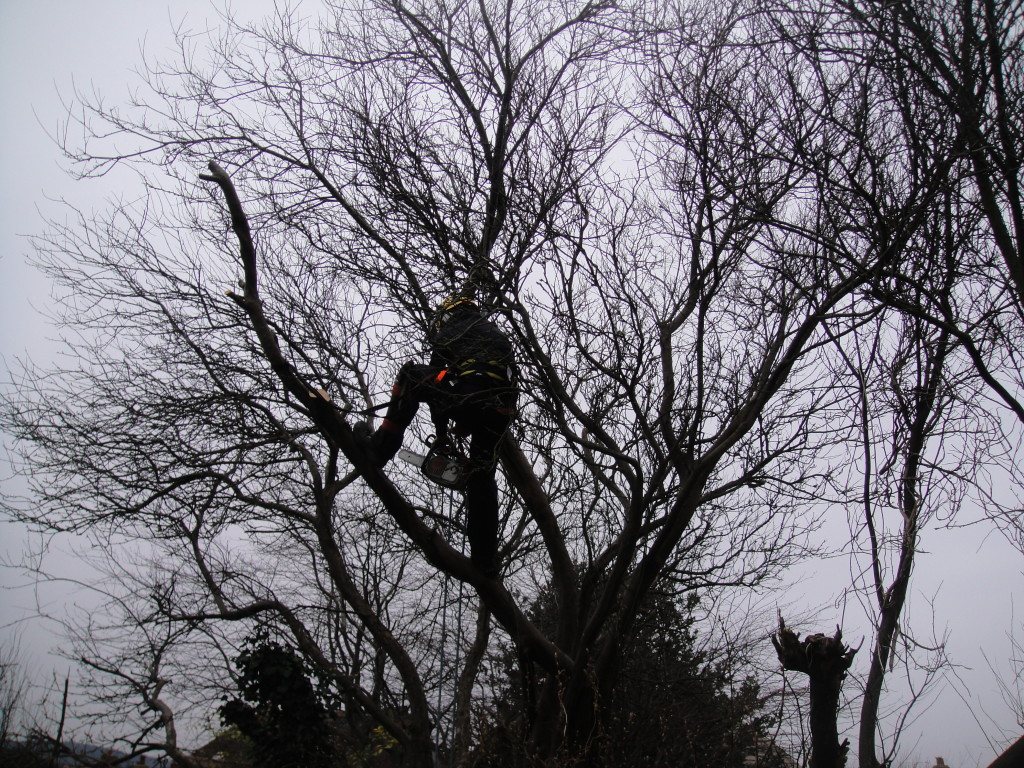 About to remove part of an overhanging branch