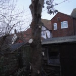 Correct cuts on the lower branches