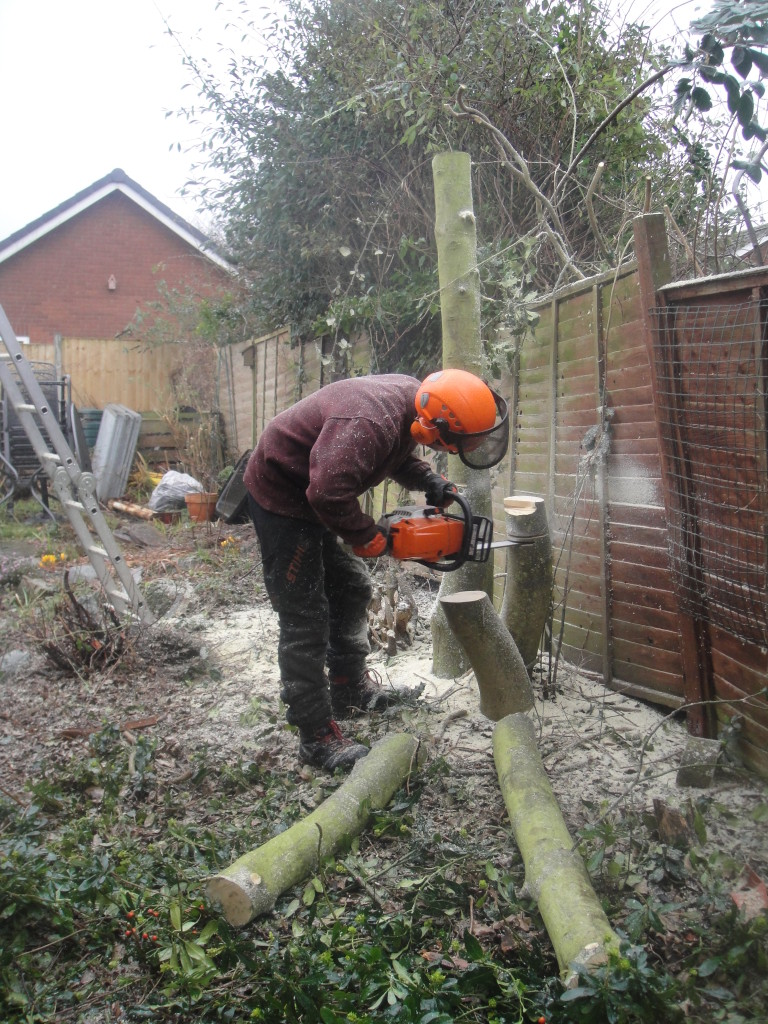 Jamie making final cuts on the Holly Tree.