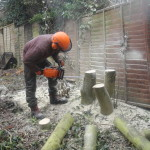 Jamie making final cuts on a three stemmed Holly Tree