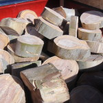 Wood from large Eucalyptus Tree