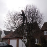 Jamie Reducing The Crown On A Young Tree