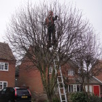 Jamie Working In The Crown Of A Young Tree