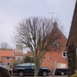 Young Tree Left With Good Shape After A 25% Crown Reduction