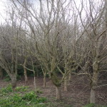 Large area of trees lifted & reduced