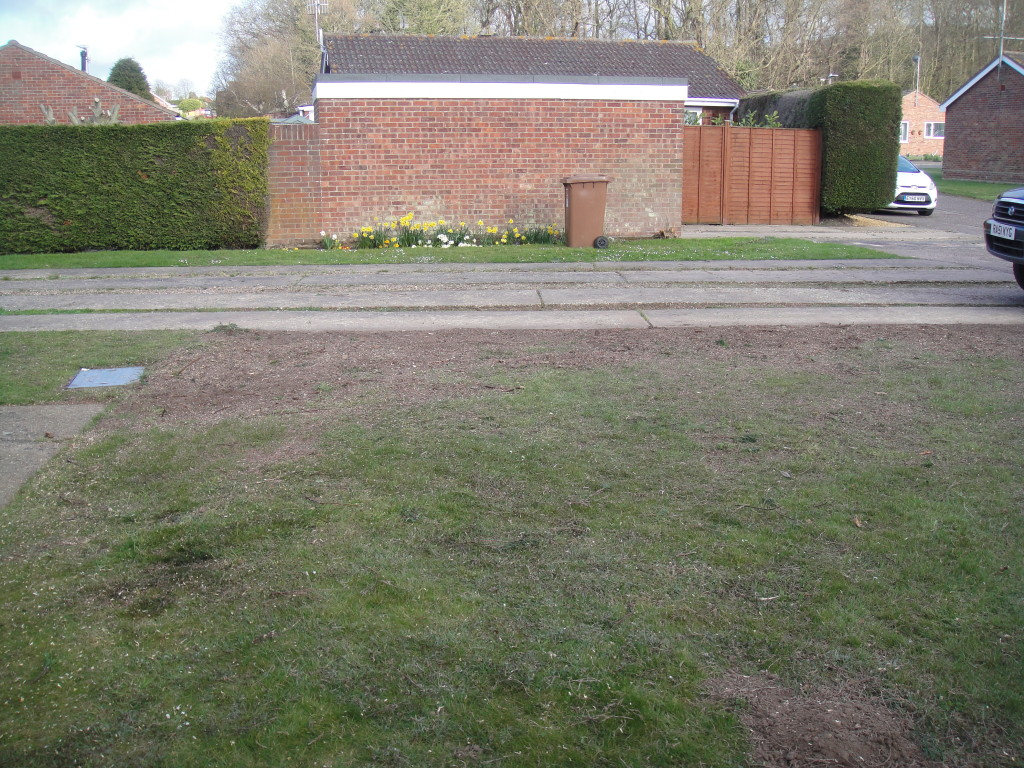 4.AFTER - Leylandii Hedge dismantled, waste removed and stems cut down to ground level - Apr '15