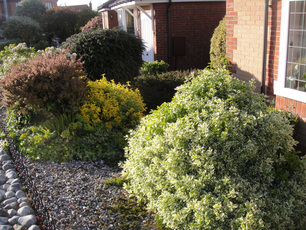 BEFORE -  All Bushes & Shrubs To Be Removed To Leave Area Clear - June'15