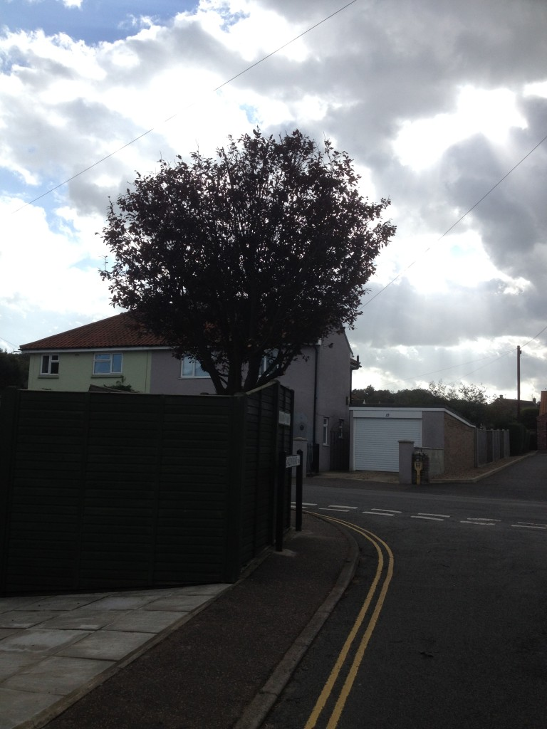 AFTER - Prunus Tree Now Lifted & Reduced By 30% - Oct '14