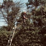 Working On A Large Mixed Hedge