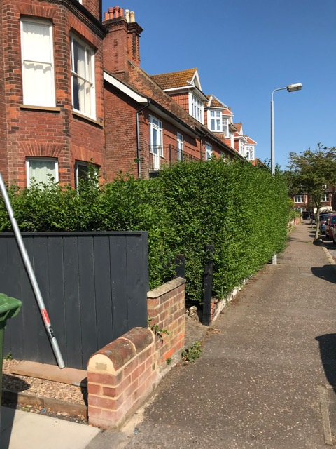 BEFORE - Privet Looking Straggly After Only 4 Weeks Since Last Cut - June '20