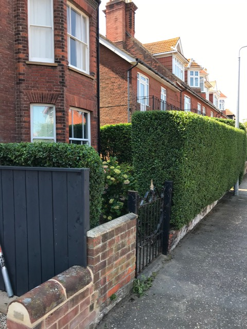 AFTER - Privet Looking Neat And Well Shaped After Summer Trim - June '20