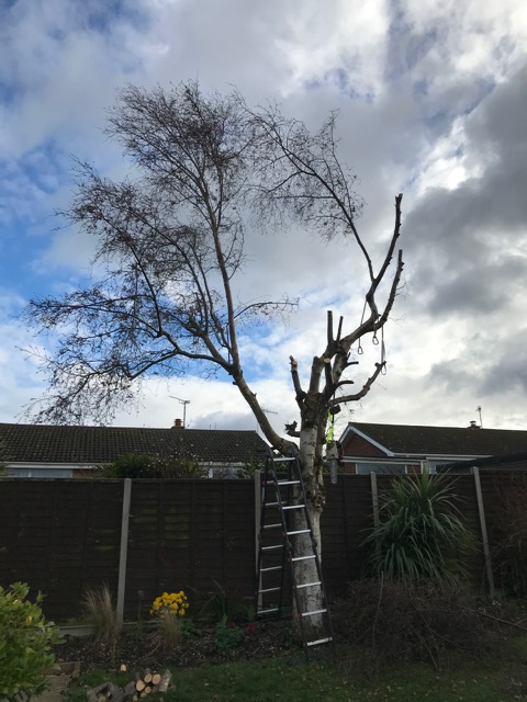 2. Half The Branches Have Been Removed.