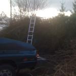 Large Hawthorn