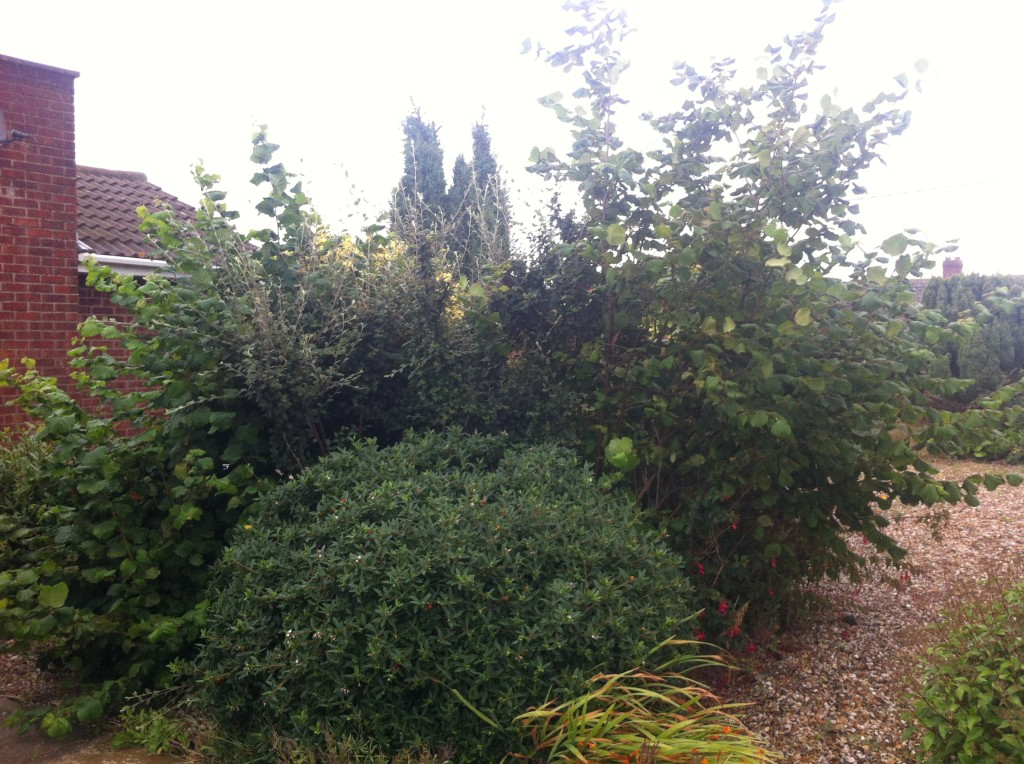 BEFORE - Mixed Hedges & Small Garden Trees - Sept '13