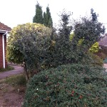 AFTER - Mixed Hedges Trimmed & Small Garden Trees Removed - Sept ' 13