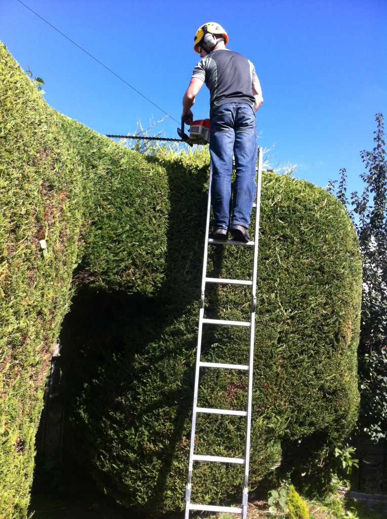 Trimming Large Leylandii Hedge {4}