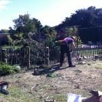 Jamie Cutting Leylandii Stumps