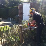 Cutting Lasts Stumps From Leylandii Hedge