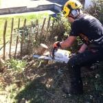 Cutting Stumps On Leylandii Hedge