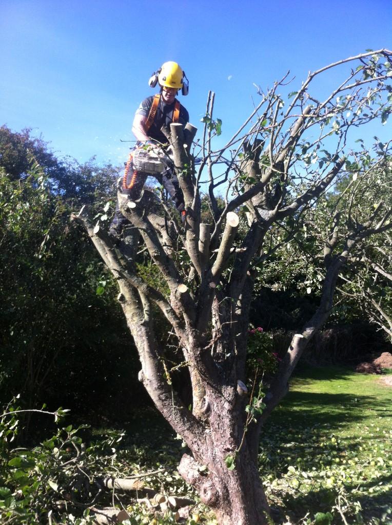 Dismantling An Apple Tree (2)