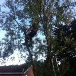 Reducing a Willow