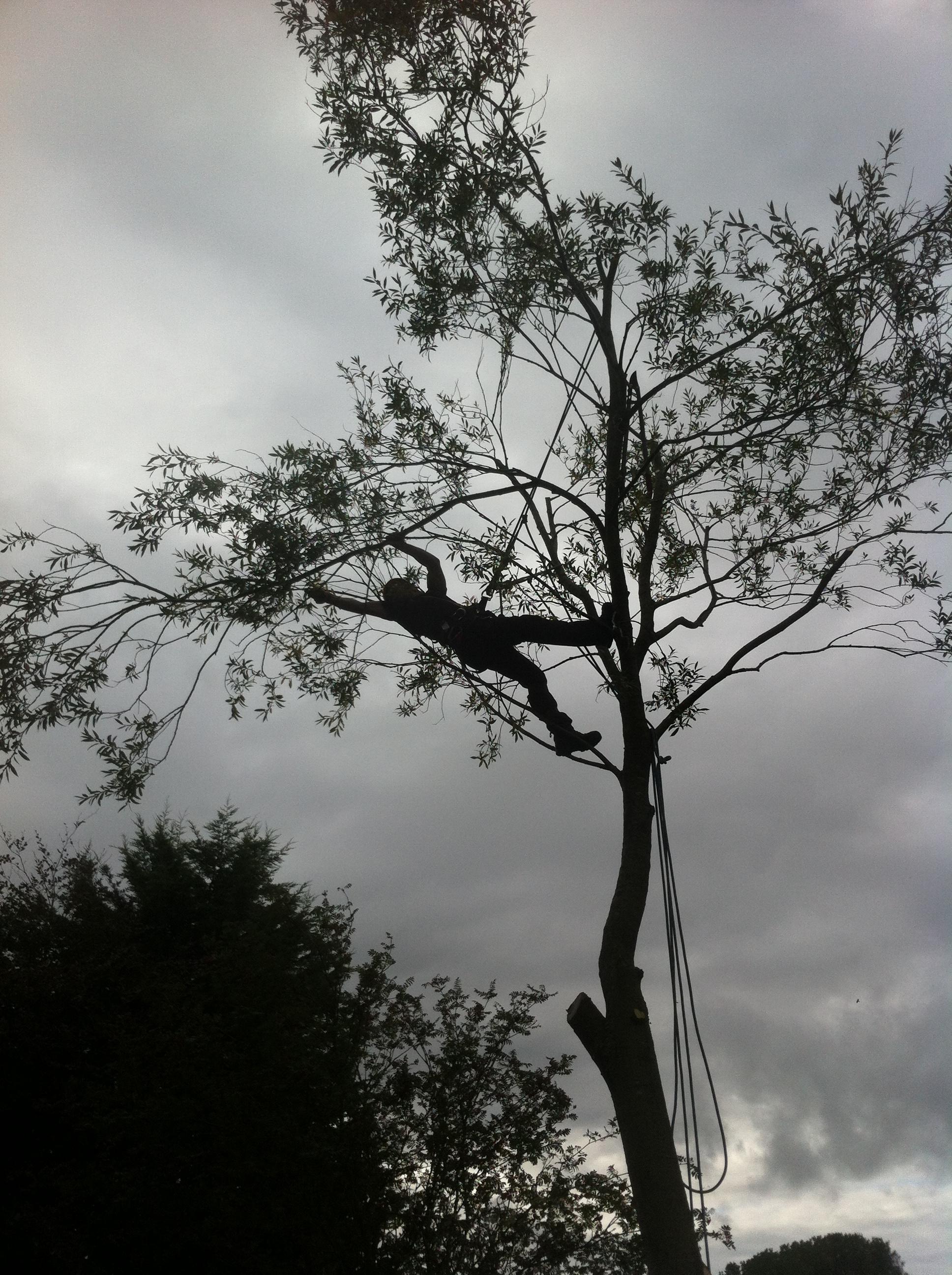 Tailored tree services offers all types of tree work for Small to medium trees for garden