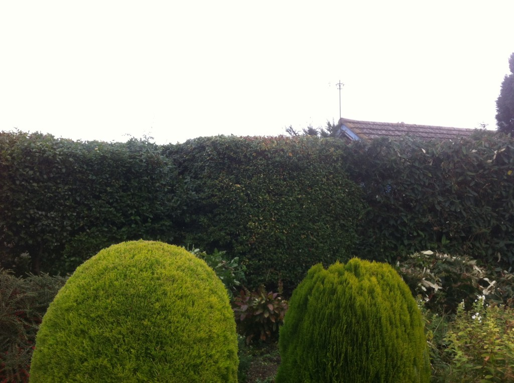 AFTER - Mixed Bushes & Tree Cut Into A Hedge - Oct '13
