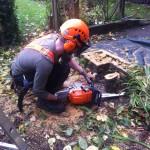 Jamie making final cuts on a small plum tree