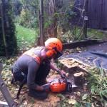 Jamie making last cut on a small plum tree