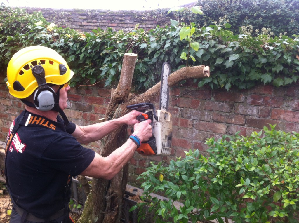 Dismantling a small Lilac tree