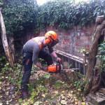 Jamie making final cuts on a Lilac tree