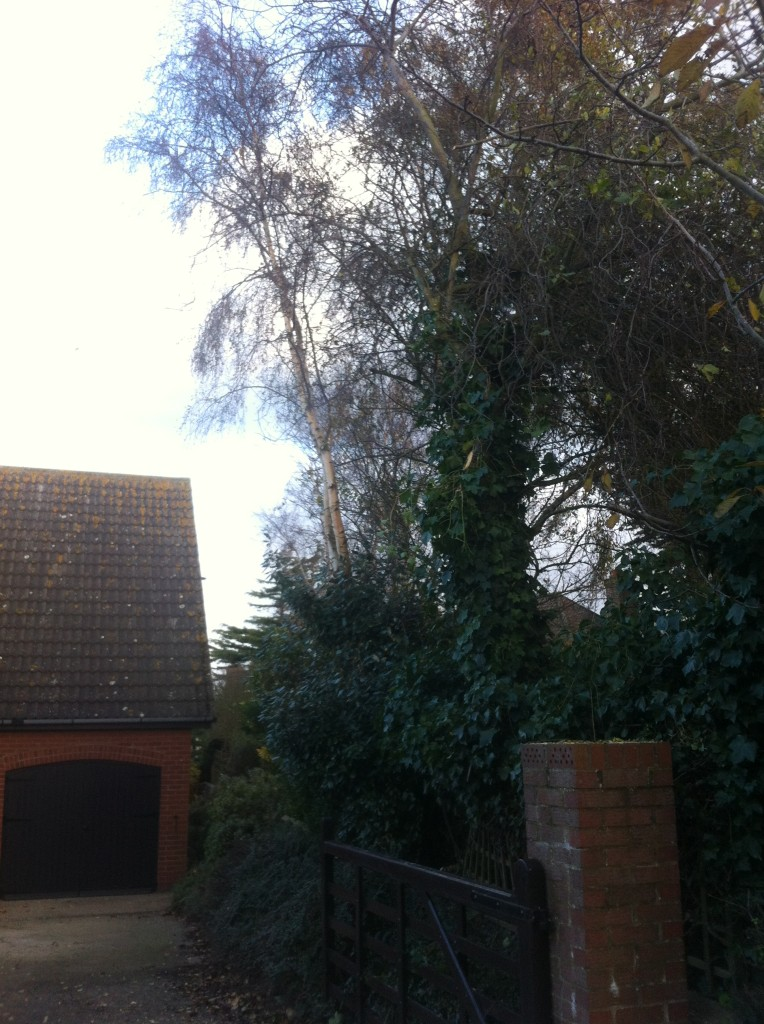 AFTER - Branches Cut Back From Neighbours Garden - Nov '13