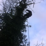 On My Way Up A Large Sycamore