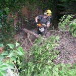 Snedding a small Leylandii Tree
