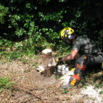 Cutting a stump down to ground level