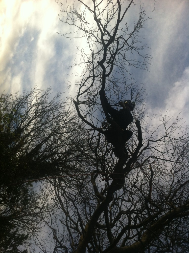 Jamie Out On A Limb
