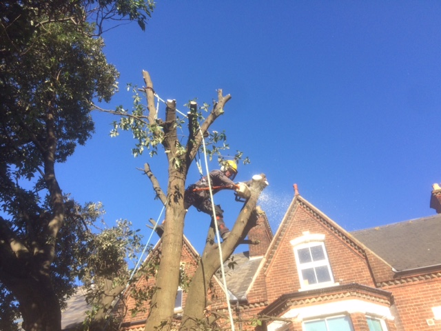 Removing lower parts of the branches