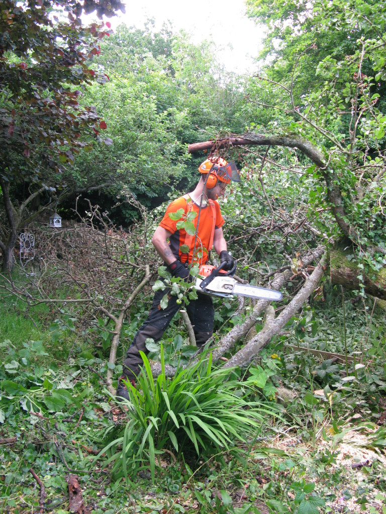 Jamie about to start on an old Apple Tree
