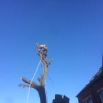 Last main stem being dismantled