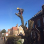 Large lower trunk to be dismantled