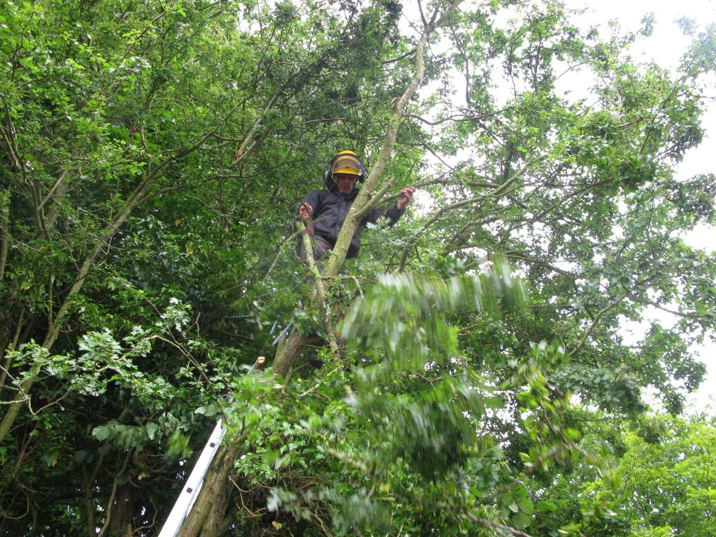 Removing a Hawthorne branch