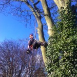 Jamie Making His Way Down From A Sycamore