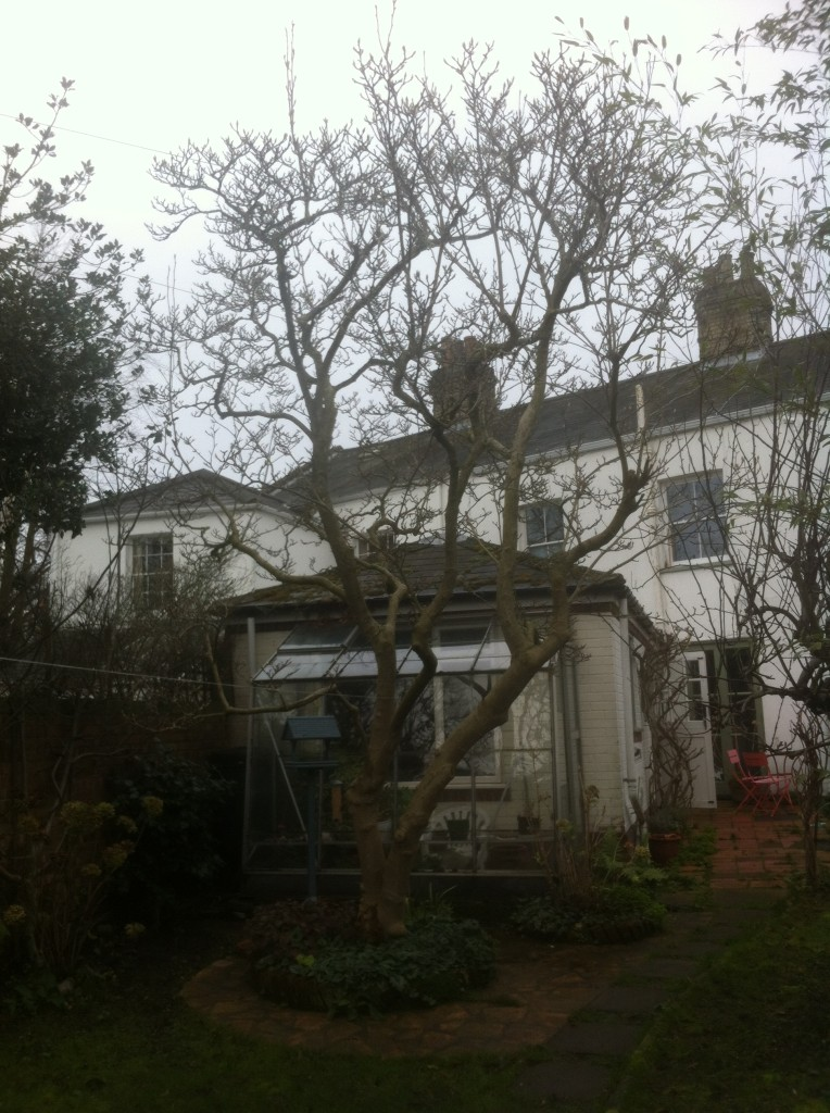 BEFORE - Needing A Height Reduction + Branches Away From House And Phone Line - Feb14